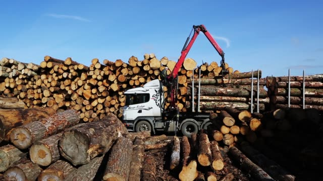 vídeos y material grabado en eventos de stock de logs are moved off lorries at aj scott sawmill on march 22 2018 in doddington england the doddington north afforestation project has begun with the... - plant part