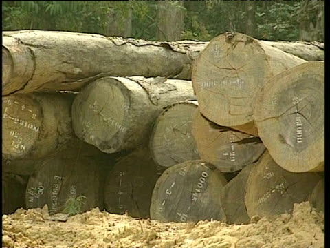 logs lie in piles in rainforest clearing cameroon; 26 feb 97 - log stock videos & royalty-free footage