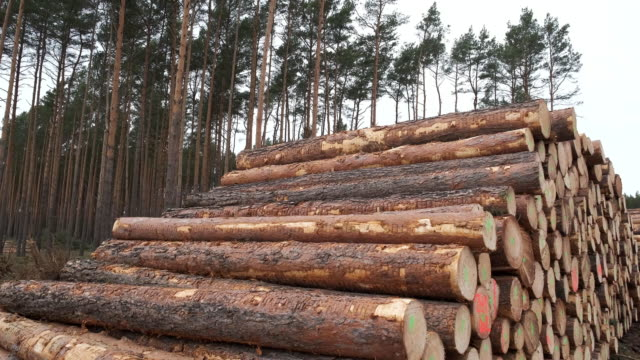 logs lie stacked on land cleared of trees at the site of the new tesla gigafactory on february 17, 2020 near gruenheide, germany. environmentalists... - log stock videos & royalty-free footage