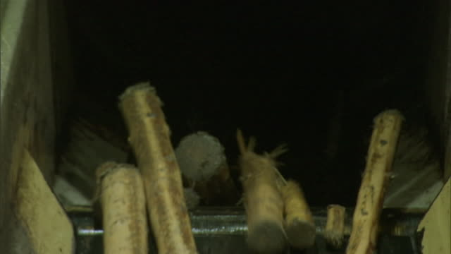 logs move along a conveyor belt and into a chute. - pulp stock videos & royalty-free footage