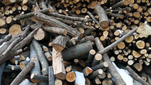 vídeos de stock, filmes e b-roll de logs of wood - ramo parte de uma planta