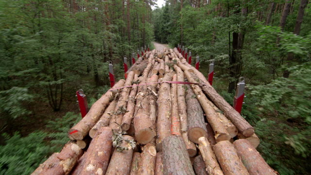 logs on truck - industria forestale video stock e b–roll