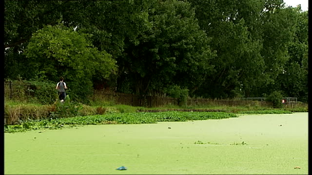 'Duckweed' problem Close shot duckweed collecting at bow of boat as along through water / Tracking shot along River Lea / Tracking shot jogger along...