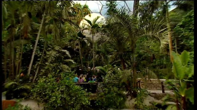 torch at eden project england cornwall eden project int general view of eden project dome interior including ben fogle putting on harness and getting... - briglia video stock e b–roll