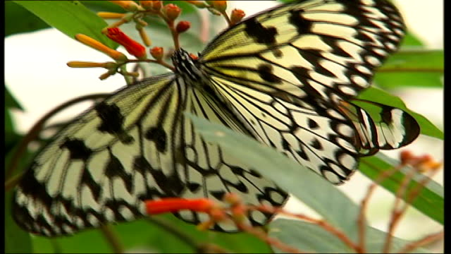 lease on syon park property extended for one year close up of butterfly - 賃貸契約点の映像素材/bロール