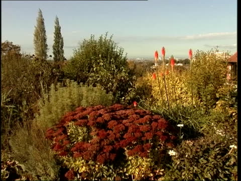 london ext sunken garden bushes and red hot pokers at horniman gardens cs purple pansy - temperate flower stock videos and b-roll footage