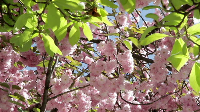 london flowers plants - almond stock videos and b-roll footage