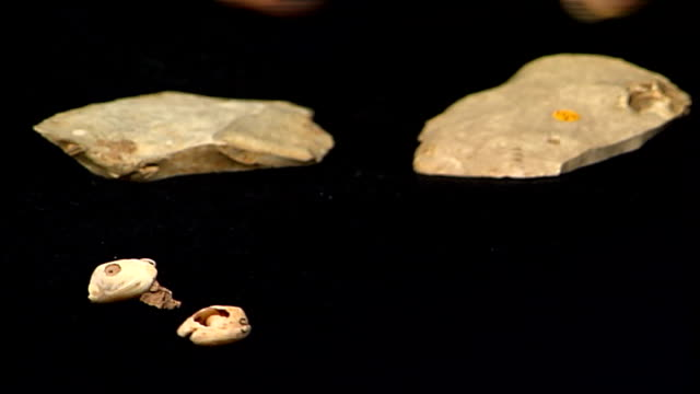 london gir int close shot two ancient sea shells with holes in middle which date from 100000 years ago and finger pointing at them professor chris... - stone object stock videos and b-roll footage