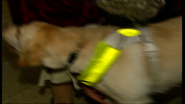London Guide Dogs 75th year celebrations ENGLAND London Fleet Street St Bride's Church INT Guide dogs with owners sat in congregation Close up of...