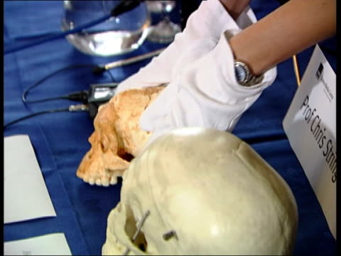 man pulling on white gloves as lifting plaster cast of skull from box onto table next full size human skull plaster cast of tiny skull dr henry gee... - ensemblemitglied stock-videos und b-roll-filmmaterial