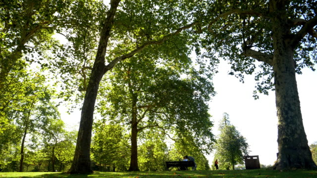 london kensington gardens in late summer - landscaped stock videos & royalty-free footage