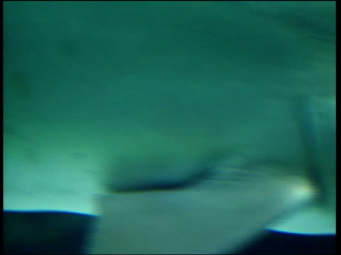 london london aquarium int cms shark swimming in tank among small fish cms small fish along cms shark along cms small fish swimming cms shark towards... - マーガレット・ホッジ点の映像素材/bロール
