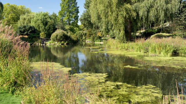 vídeos de stock, filmes e b-roll de jardim de londres regent ' s park queen mary ' s - parque regents