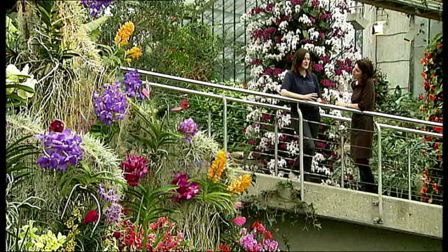 london richmond kew gardens princess of wales conservatory int goods shots various of colourful exotic orchids lara jewitt interview sot close ups of... - anthurium stock videos & royalty-free footage