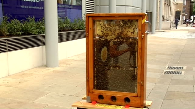 london taxi cab customised to promote south bank event 'pestival' ext beehive in street next to cab / close up of bees in hive - customised stock videos & royalty-free footage