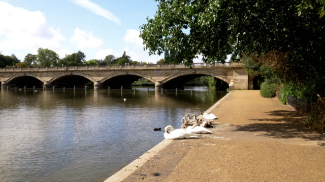 london the serpentine lake in hyde park - the serpentine london stock videos & royalty-free footage