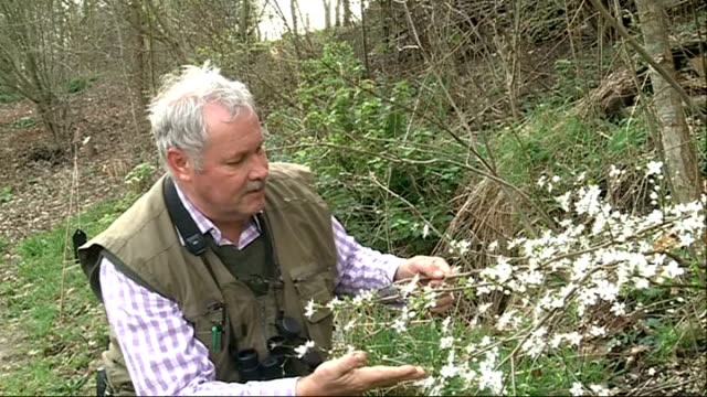 london wetland centre; england: london: london wetland cente: ext furry catkins on budding tree branches aconite plants john arbon interview sot... - zweig stock-videos und b-roll-filmmaterial