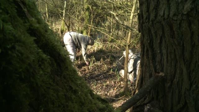 vídeos de stock, filmes e b-roll de london wildlife trust receives grant to protect endangered snail; various of volunteer looking through the undergrowth - invertebrado