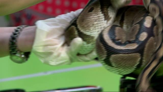 london london zoo int various of animals being weighed on scales african bullfrog being handled by grant kotner / royal python / waxymonkey frog held... - 秤点の映像素材/bロール