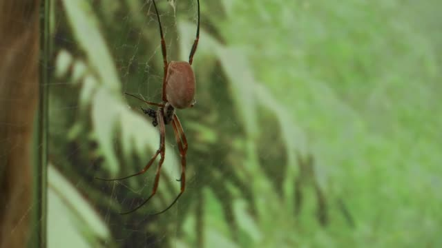 stockvideo's en b-roll-footage met london zoo begins annual stocktake of animals england london zsl london zoo int various of stock taking spiders and locusts in insects enclosure - omsloten ruimte