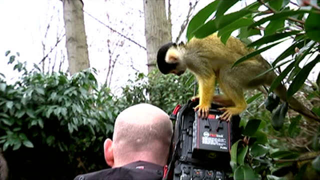 london zoo carries out annual measurement and stocktake; england: london: regents park: zsl london zoo: ext monkeys playing with child's abacus in... - work tool stock videos & royalty-free footage