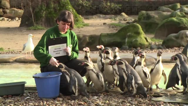 london zoo holds its stocktake a compulsory annual count required as part of the zoos licence - annual event stock videos and b-roll footage