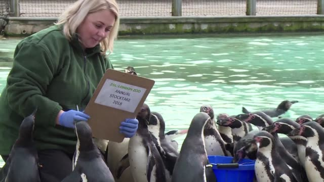 zsl london zoo on wednesday began its week long annual stocktake with keepers counting everything from lions to spiders - week stock videos and b-roll footage
