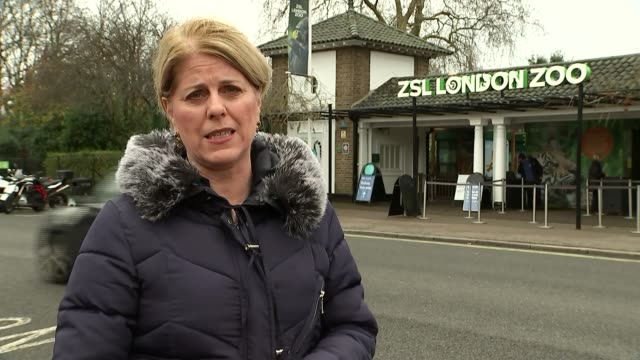 London Zoo reopens following fire which killed several animals DAY Reporter to camera People going into zoo Vox pops Long shot firefighter on roof...