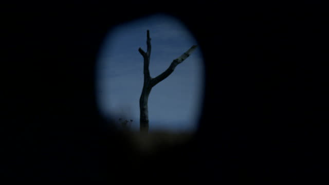 a lone, bare tree seen through a peephole comes into and goes out of focus, france. - trench stock videos and b-roll footage