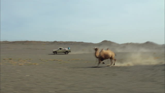 lone camel running 02 - camel stock videos & royalty-free footage