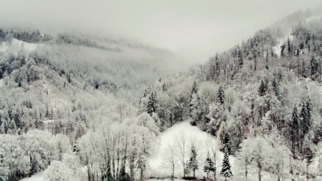 Lone Chalet and Snowy Forest in Interlaken, Switzerland - Drone Shot