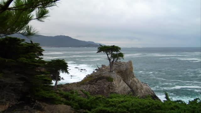 MS, CS, PAN, Lone cypress on rock, Mile Drive, California, USA
