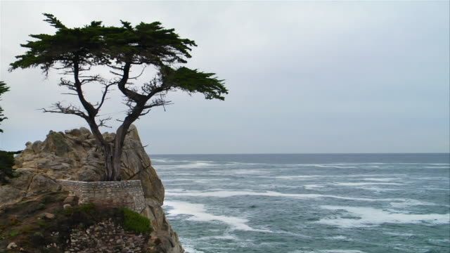 ms, cs, lone cypress on rock, mile drive, california, usa - nordpazifik stock-videos und b-roll-filmmaterial