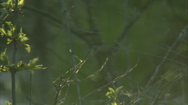 lone dragonfly landing. - twig stock videos & royalty-free footage