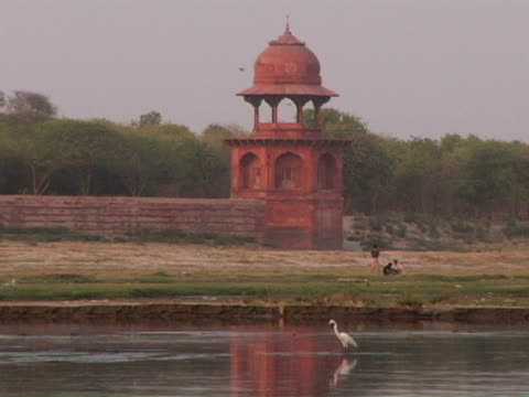ws, lone egret wading in yamuna river, taj mahal tower in background, agra, india - aquatisches lebewesen stock-videos und b-roll-filmmaterial