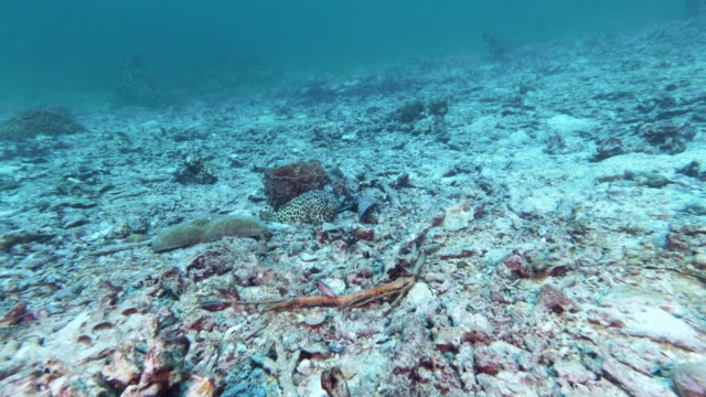 lone fish on underwater bleached coral reef - coral cnidarian stock videos & royalty-free footage