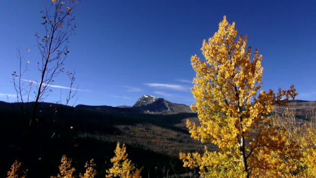 lone jagged mountain peak with golden leafed tree blowing in the wind in foreground. - 色が変わる点の映像素材/bロール