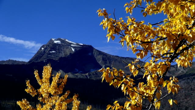 lone jagged mountain peak with golden leafed tree blowing in the wind in foreground. - glacier national park us stock videos and b-roll footage
