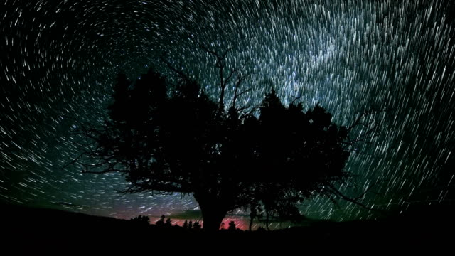 Lone Juniper Tree and Red Northern Lights Abstract Star Trails Night Time Lapse