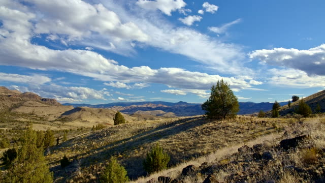 lone juniper tree on a ridge under blue sky and clouds in the desert - oregon us state stock videos & royalty-free footage