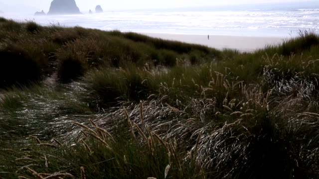 stockvideo's en b-roll-footage met lone man walks on distant beach - noordelijke grote oceaan