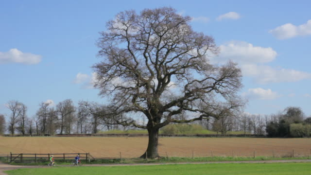 montage lone oak tree changing with each season / st. albans, hertfordshire, united kingdom - le quattro stagioni video stock e b–roll