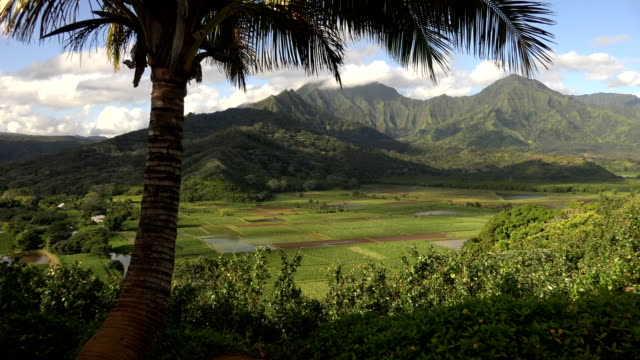 lone palm tree on edge of valley on kauai island - butte rocky outcrop stock videos & royalty-free footage
