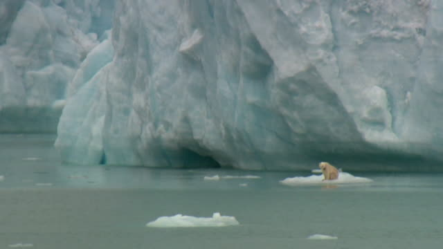 ws lone polar bear (ursus maritimus) on ice floe, devon island, nunavut, canada - ice floe stock videos & royalty-free footage