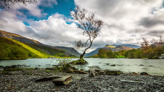 lone tree at llyn padarn lake in wales - time lapse tracking shot - snowdonia stock videos & royalty-free footage