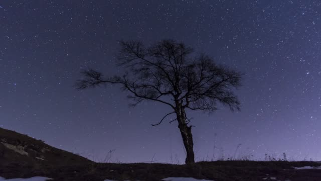 Lone Tree at night with stars and clouds