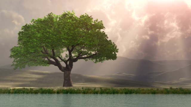lone tree by the water with rays of light - oak stock videos and b-roll footage