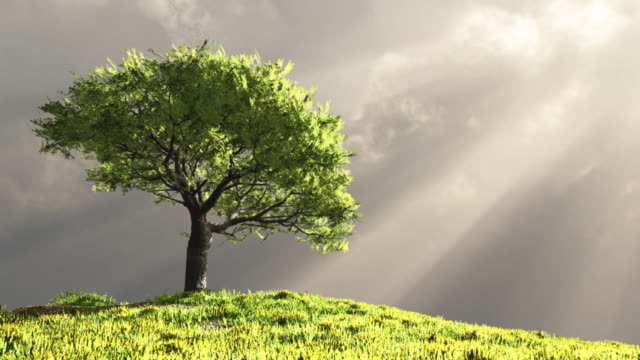 lone tree on a hill - hill stock videos & royalty-free footage