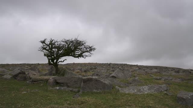 lone tree on dartmoor - dartmoor stock videos & royalty-free footage