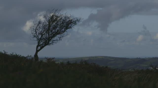 lone tree on dartmoor - single tree stock videos & royalty-free footage